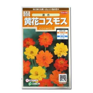 花の種 黄花コスモス[混合] 3ml(メール便可能)|vg-harada