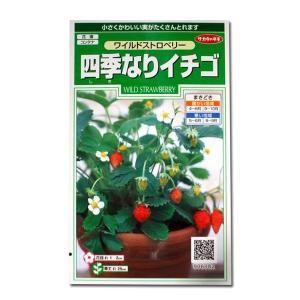 花の種 四季なりイチゴ[ワイルドストロベリー] 0.1ml(メール便可能)|vg-harada