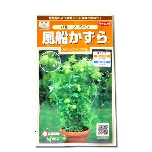 花の種 風船かずら[バルーン バイン] 2ml(メール便発送)|vg-harada