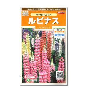 花の種 ルピナス[ラッセル ミックス] 2ml(メール便可能)|vg-harada