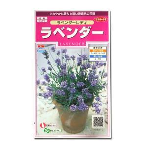 花の種 ラベンダー[ラベンダーレディ] 0.1ml(メール便発送)|vg-harada