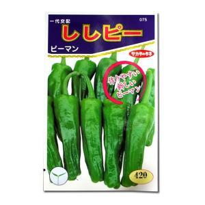 野菜の種/種子 ししピー・ピーマン 20粒(メール便可能)サカタのタネ 種苗|vg-harada