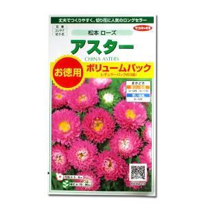 花の種 アスター[松本 ローズ]ボリュームパック 3ml(メール便発送)|vg-harada
