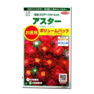 花の種 アスター[松本 クリアースカーレット]ボリュームパック 3ml(メール便発送)|vg-harada