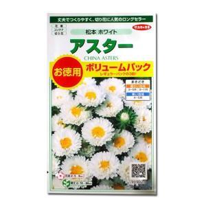 花の種 アスター[松本 ホワイト]ボリュームパック 3ml(メール便可能)|vg-harada