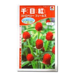 花の種 千日紅[ストロベリー フィールズ] 1ml(メール便可能)|vg-harada