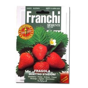 野菜の種/種子 四季なりイチゴ イタリア野菜 0.5g/約1200粒 (メール便可能)|vg-harada