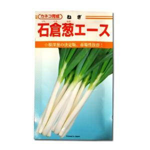 野菜の種/種子 石倉葱エース・ねぎ 20ml (メール便可能)|vg-harada