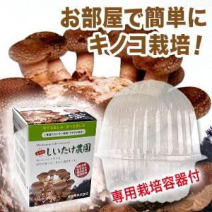 お部屋で簡単にキノコ栽培![もりの しいたけ農園]シイタケ 専用栽培容器付きセット きのこ・栽培セット