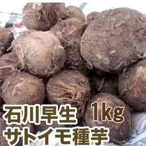 野菜・種/苗 石川早生 里芋(サトイモ)種芋・生もの種 1kg|vg-harada
