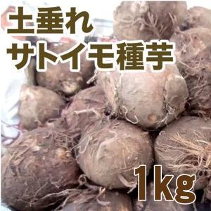 野菜・種/苗 土垂れ(どたれ) 里芋(サトイモ)種芋・生もの種 1kg 【3月下旬頃発送】|vg-harada