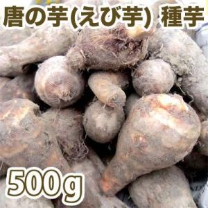 野菜・種/苗 唐の芋/とうのいも(えび芋・里芋) 種芋・生もの種 量り売り500g(4月上旬より順次発送)|vg-harada