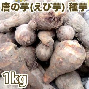 野菜・種/苗 唐の芋/とうのいも(えび芋・里芋) 種芋・生もの種 量り売り1kg(4月上旬より順次発送)|vg-harada