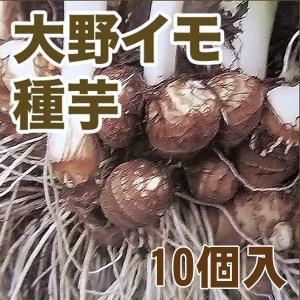 野菜・種/苗 大野イモ/里芋  種芋 芋 いも・生もの種 10個入