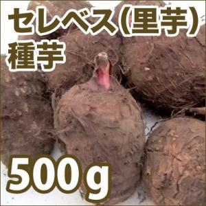野菜・種/苗 セレベス/里芋 種芋・生もの種 量り売り500g(4月上旬より順次発送)|vg-harada
