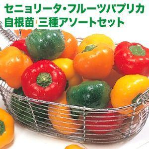 野菜の苗 セニョリータ三種アソートセット・フルーツパプリカ 自根苗 三種2本ずつの6ポット入りセット |vg-harada
