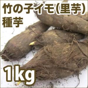 野菜・種/苗 竹の子イモ/筍イモ/京イモ/里芋 種芋・生もの種 量り売り1kg|vg-harada