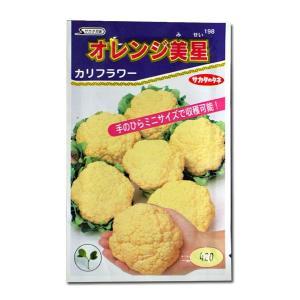 野菜の種/種子 オレンジ美星・カリフラワー 0.7ml(メール便可能)サカタのタネ 種苗|vg-harada