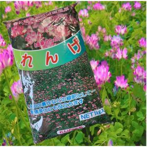 今年も大特価!れんげ・レンゲ草・蓮華草 花の種 種子 1kg|vg-harada