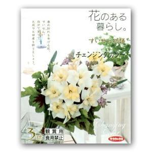 花・球根 スイセン/水仙 チェンジングカラー 花のある暮らし・すいせん物語 3球入|vg-harada