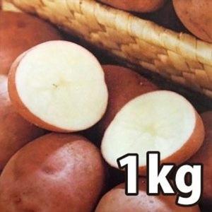 野菜・種/苗[春ジャガイモ種芋]北海道産 ベニアカリ べにあかり じゃがいも種芋・生もの種 混玉<SS〜Lサイズ>量り売り1kg|vg-harada