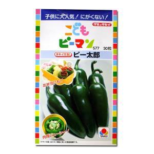 野菜の種/種子 こどもピーマン ピー太郎・ピーマン 30粒(メール便可能)タキイ種苗|vg-harada