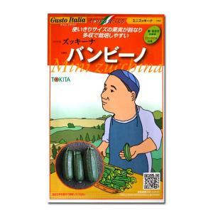 野菜の種/種子 バンビーノ/ミニズッキーナ/ミニズッキーニ・イタリア野菜 8粒 (メール便可能)|vg-harada