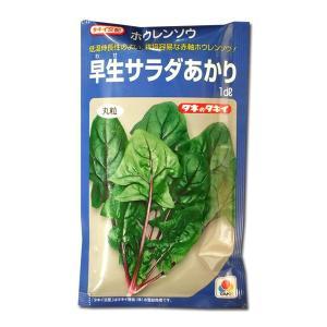 野菜の種/種子 早生サラダあかり・ほうれんそう 1dl (メール便可能)タキイ種苗|vg-harada