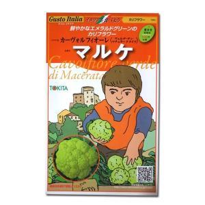 野菜の種/種子 カーヴォルフフィオーレ マルケ・カリフラワー・イタリア野菜 50粒 (メール便可能)|vg-harada