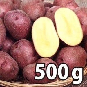 野菜・種/苗[春ジャガイモ種芋]北海道産 インカルージュ 北海98号 じゃがいも種芋・生もの種 量り売り500g|vg-harada