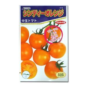 野菜の種/種子 シンディーオレンジ・中玉トマト 14粒 (メール便可能)サカタのタネ|vg-harada