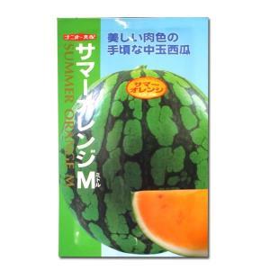 野菜の種/種子 サマーオレンジ M・スイカ 8粒 (メール便可能)|vg-harada