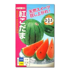 野菜の種/種子 紅こだま・スイカ 8粒 (メール便可能)|vg-harada