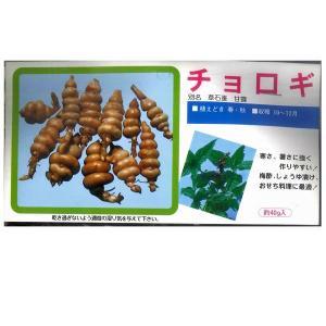 野菜・種/苗 食用球根 チョロギ・草石蚕・甘露 種・生もの種 約40g [袋詰め山菜] vg-harada