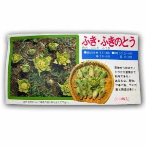野菜の苗 ふき・ふきのとう・山ぶき・ふうき 苗・種 1〜2株入[袋詰め山菜]|vg-harada