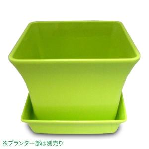 ベビーリーフプレート(トレー)12型 グリーン ガーデニング・プランター|vg-harada