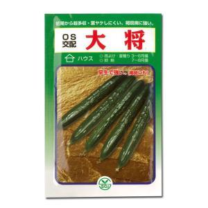 野菜の種/種子 大将・きゅうり 350粒 (メール便可能/大袋)|vg-harada