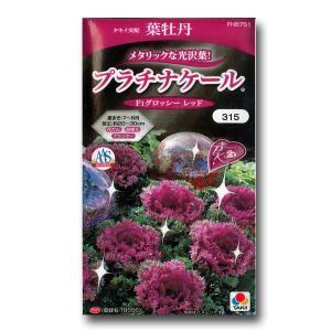 花の種 葉牡丹 プラチナケール F1グロッシーレッド 15粒(メール便可能) vg-harada