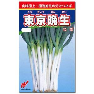 野菜の種/種子 東京晩生葱・ねぎ 20ml (メール便可能)|vg-harada