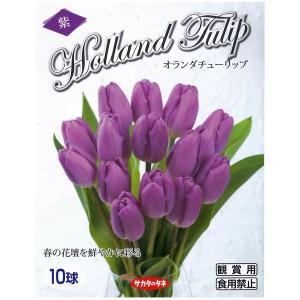 半額セール!花・球根 オランダチューリップ・パープルブーケ [紫] 10球入[秋植え球根]|vg-harada