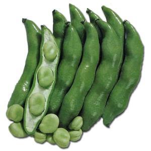 野菜の種/種子 三連・そら豆 そらまめ 1dl (メール便可能)サカタのタネ|vg-harada