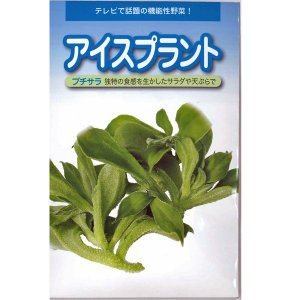 野菜の種/種子 アイスプラント・プチサラ 60粒 (メール便発送) vg-harada
