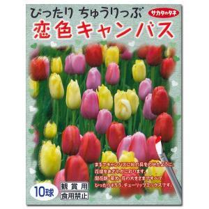 花・球根 ぴったりチューリップ・恋色キャンバス 10球入 [秋植え球根]|vg-harada