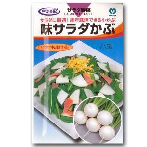 野菜の種/種子 味サラダかぶ 2.3ml (メール便可能)|vg-harada