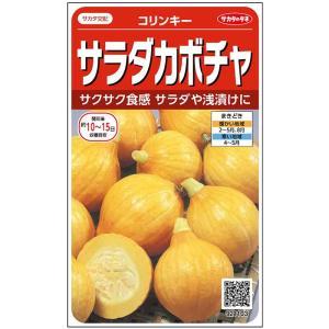 野菜の種/種子 コリンキー・フレッシュかぼちゃ 6.5ml (メール便可能)サカタのタネ|vg-harada