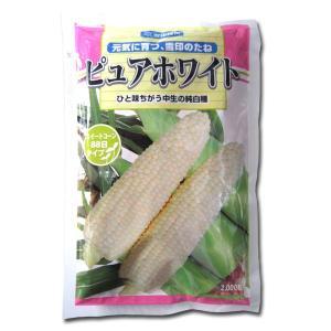 野菜の種/種子 ピュアホワイト・とうもろこし 2000粒  (大袋)|vg-harada