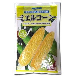 野菜の種/種子 ミエルコーン・とうもろこし 2000粒  (大袋)|vg-harada
