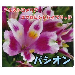 花の苗 アルストロメリア エクセレントハイブリッド パシオン/1ポット/10.5cmポット/鉢植え/花壇/切り花/宿根 花苗(4月上旬より順次発送)|vg-harada
