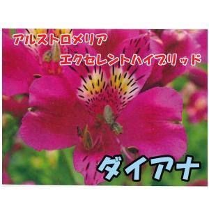 花の苗 アルストロメリア エクセレントハイブリッド ダイアナ/1ポット/10.5cmポット/鉢植え/花壇/切り花/宿根 花苗|vg-harada