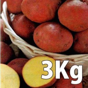 野菜・種/苗[春じゃがいも種芋]アンデス じゃがいも種芋・生もの種 量り売り3kg|vg-harada